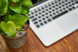 greenery in offices boost productivity